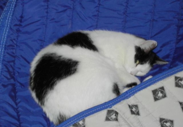 Spot asleep on a horse blanket, 2004